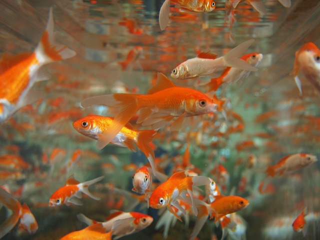 Marketing to Millennial goldfish